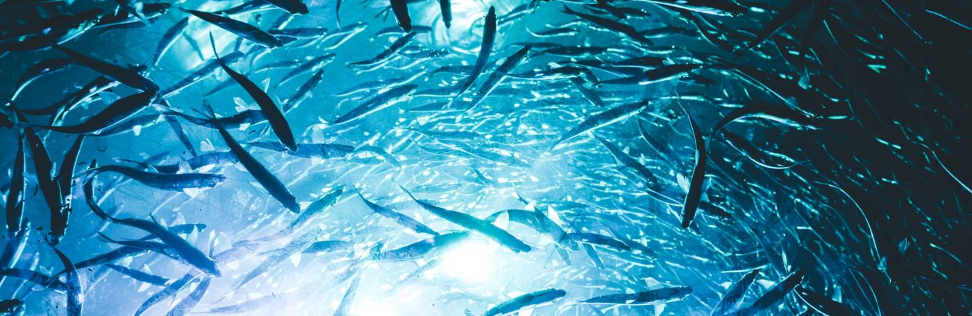 phytoplankton benefits